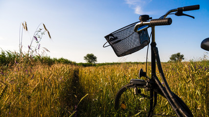 bicycle in cornfield