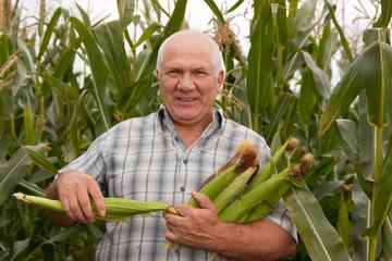 man gathering corn