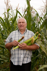 man gathering corn on field