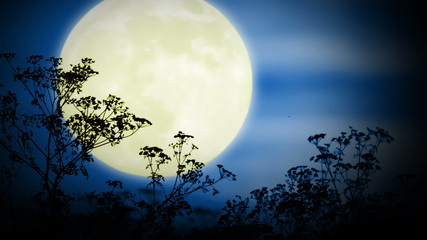 Big moon and grass