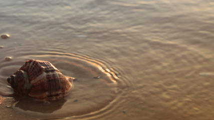 Seashell on the golden sand