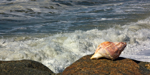 Gastropod shell and seawaves