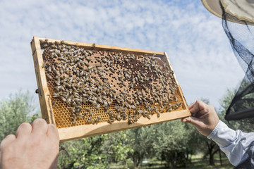 The beekeeper has control honeycomb