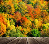 Colorful autumnal forest with wooden floor