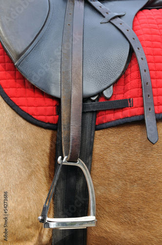 close up of a horse harness