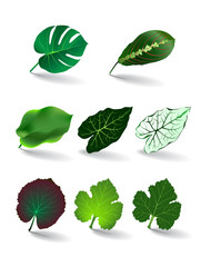leaves set/ vector eps 10