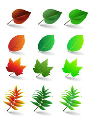 Vector leaves set