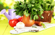 Fresh herb in pitcher on wooden table on natural background