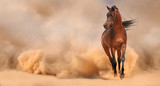Arabian horse running out of the Desert Storm - 54278612