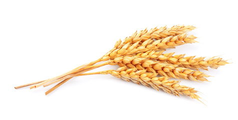 wheat isolated