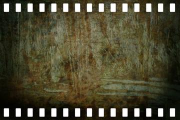 Kleinbildnegativ aus Filmstreifen