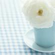 White rose in a light blue vase