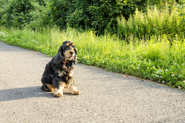 Dog sitting on road.