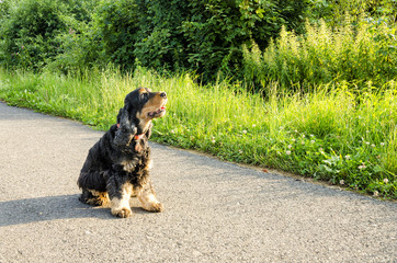Dog sitting on road and looking away.