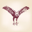 hawk - hand drawn  vector illustration  isolated