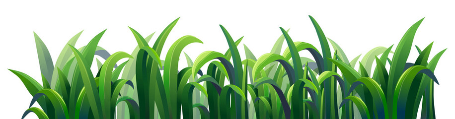 Green elongated grasses
