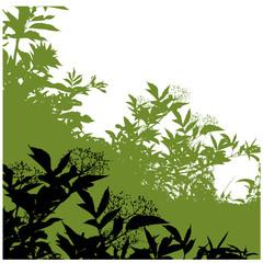 Bäume, Silhouette, Hintergrund, Holunder