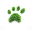 Grass pet paws