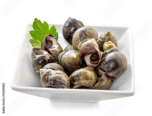 Sea shells with herbs on a white background