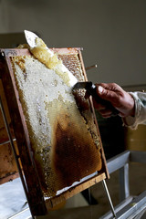 Honeycomb being cleaned