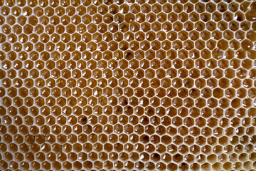 Honeycomb frame full with honey