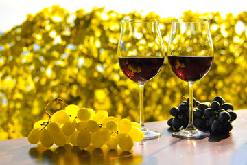 Pair of wineglasses and bunch of grapes. Lavaux region, Switzerl