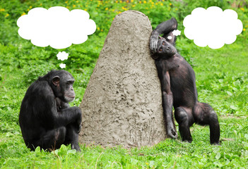 Two funny chimpanzees with speech bubles.