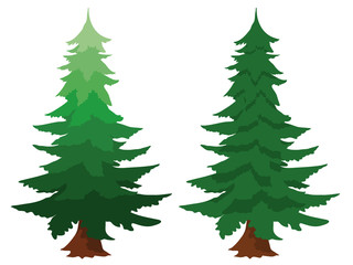 Two evergreen fir trees