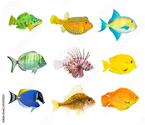 Great collection of a tropical fish.
