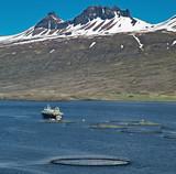 aquaculture salmon farm poster