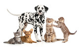 pets animals group collage for veterinary or petshop isolated - 54318447