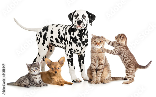 Keuken foto achterwand Kat pets animals group collage for veterinary or petshop isolated