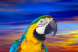 Closeup of  macaw against sunset sky
