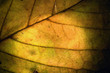 macro close up abstract of a green yellow  leaf