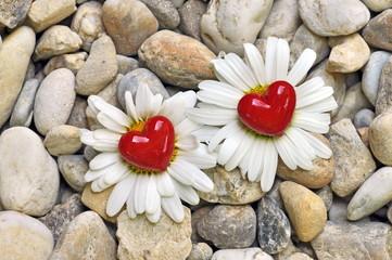 Zwei Blumen und Hezen