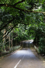 Road through tropical forest