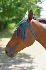 Thoroughbred Horse with Fly Mask Protector
