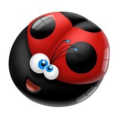 coccinella sferica