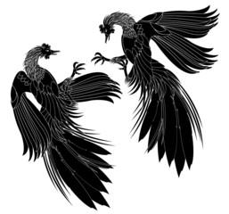 Black chicken.