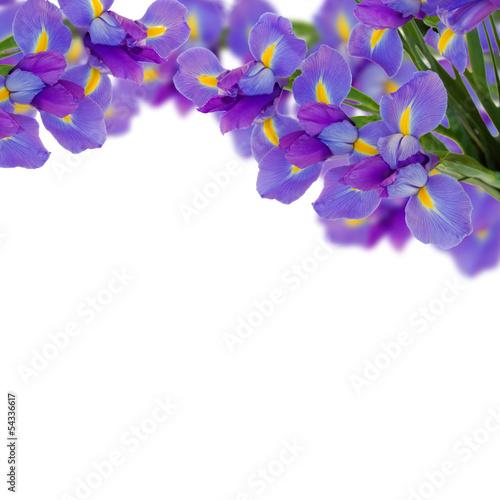 Spoed canvasdoek 2cm dik Iris blue irises border