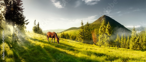 Horse on a summer pasture in the mountains