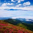 Flowering meadows