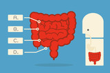 Intestines infographics vector