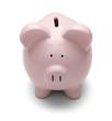 Piggy Bank Stare