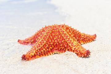 Colorful sea star (Starfish) on a beach