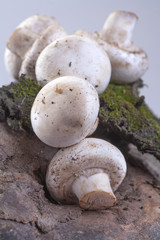 organically grown mushrooms