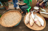 Fresh fish in rural market