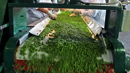 Peas processing factory