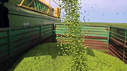 Pouring peas