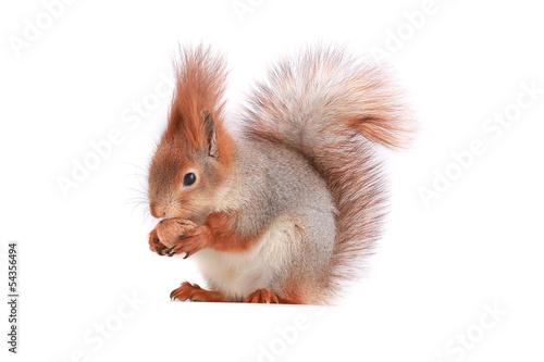 Papiers peints Squirrel squirrel